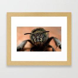 Ape (It's not a Monkey) Framed Art Print