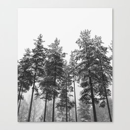 simply trees in winter Canvas Print