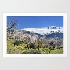 Flowering Almond At The Mountains II Art Print