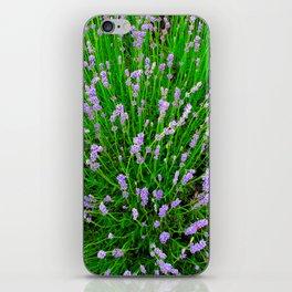 Lavender Close Up iPhone Skin