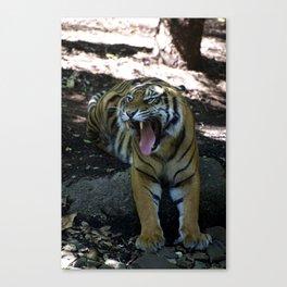 Snarling Tiger Canvas Print