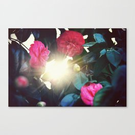 Red Rose Sunset Canvas Print