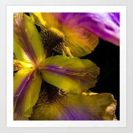 inside a lily Art Print