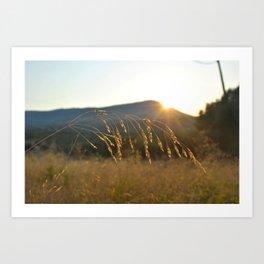 wheat grass  Art Print