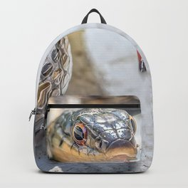 Garter snake with its tongue out Backpack