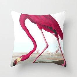 Flamingo Vintage Scientific Bird Illustration Throw Pillow