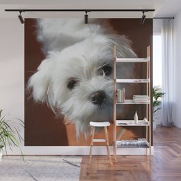 Cute Maltese asking for a treat Wall Mural
