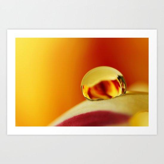 Fiery Tulip Drop Art Print