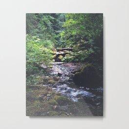 Northwest Rainforest Metal Print