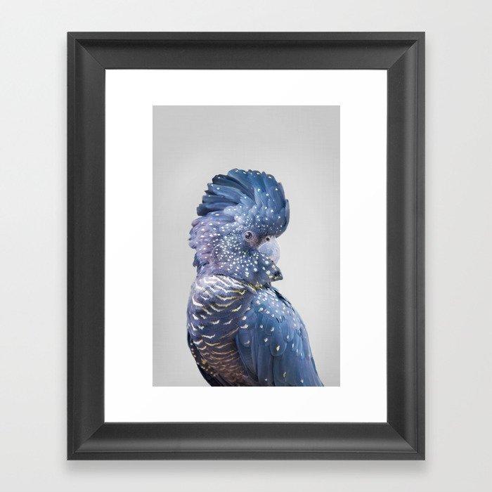 Black Cockatoo Gerahmter Kunstdruck