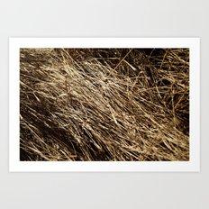Dry grass rhythms Art Print