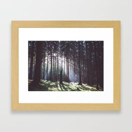 Magic forest - Landscape and Nature Photography Framed Art Print