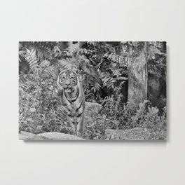 Tiger Mimicry Metal Print
