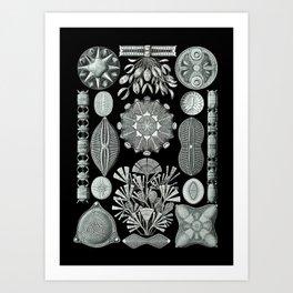 Ernst Haeckel - Scientific Illustration - Diatomea Art Print
