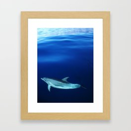 Dolphin, blue and sea Framed Art Print