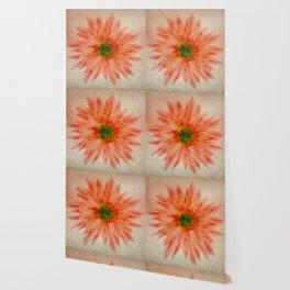 salmon flower Wallpaper
