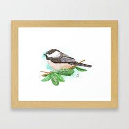 Black-capped Chickadee Framed Art Print