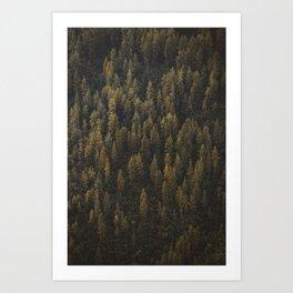 Alaska Tree Wall Art Print