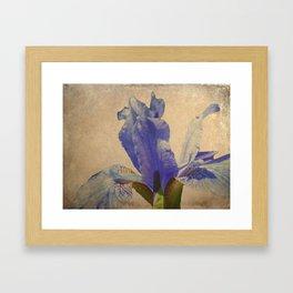 Antique Iris Framed Art Print