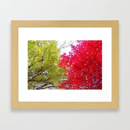 Competing Fall Trees Framed Art Print
