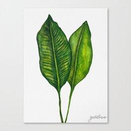 Tropical Collection part 1 Canvas Print
