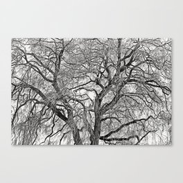Weeping Willow in Spring Canvas Print