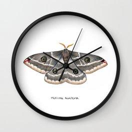 Mexican Agapema  (Agapema anona) Wall Clock