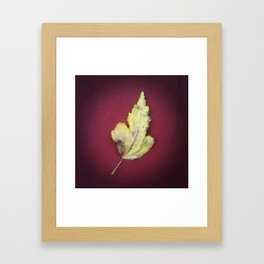 Leaf no. 2 Framed Art Print
