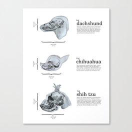 Dog Skull Comparison Canvas Print