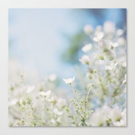 . sweet spring . Canvas Print