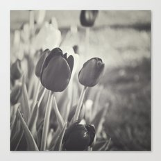 When Spring Was Here B/W Canvas Print