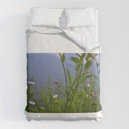Lady Comforters
