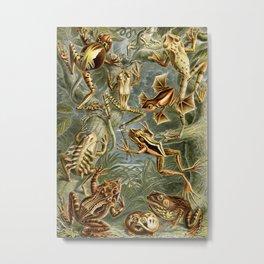 Ernst Haeckel Batrachia 1904 Poster Metal Print
