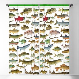 Illustrated Northeast Game Fish Identification Chart Blackout Curtain