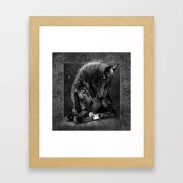 Black Popular Friesian Horse Framed Art Print