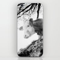 cow iPhone & iPod Skins featuring COW by Julia Aufschnaiter