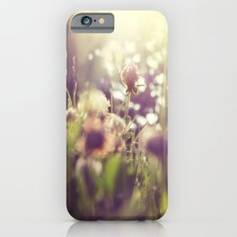 Dandelions Flowers Sunlight Abstract  iPhone Case