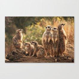 Meerkat Family Photography Canvas Print
