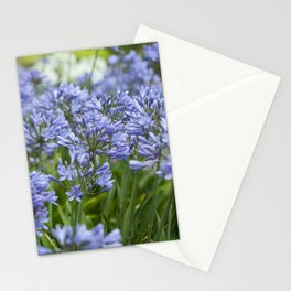 Field of Agapanthus Stationery Cards