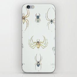 Eight Legs: Antique Spider Insect Print iPhone Skin