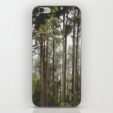 early morning Trees iPhone & iPod Skin