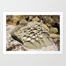 Stone Lace Wedge Boulder Rock Geology Sandstone Geological Washington Chuckanut Art Print