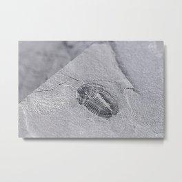 Utah - Trilobite Fossil Slab Metal Print