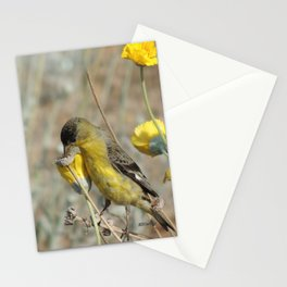 Mr. Lesser Goldfinch Feeds on Seeds Stationery Cards