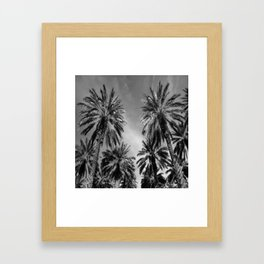 Black & White Date Palms Yuma Pencil Drawing Photo 2 Gerahmter Kunstdruck