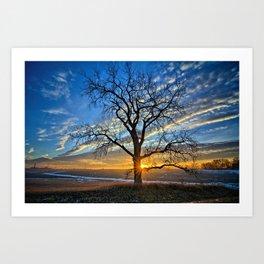 Sunburst Cottonwood Art Print