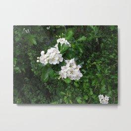 Hedgerow Flowers Metal Print