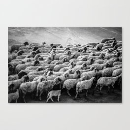The Woolen Slaves March Canvas Print