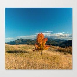 Simple Fall Tree Canvas Print