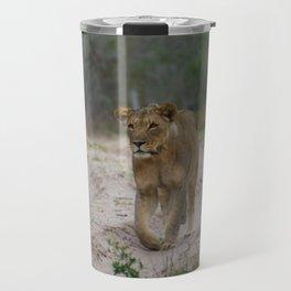 Female Lion at Tembe Elephant Park Travel Mug